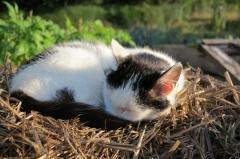 chats,campagne,jardin,été